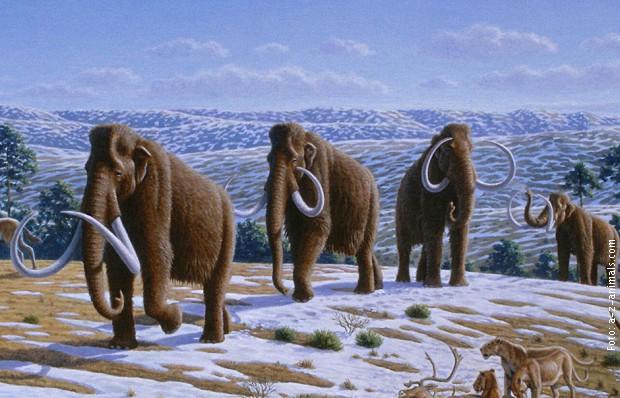 Runasti mamuti nestali su sa Zemlje pre 4.000 godina zbog promene klime i dejstva čoveka