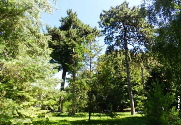 Београдско благо- Ботаничка башта