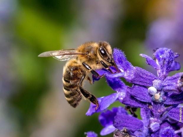 Život pčela je red,rad i disciplina
