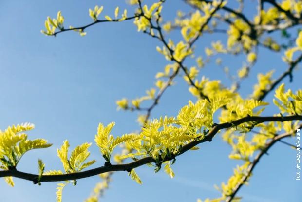 Stiže pravo proleće, iz dana u dan sve toplije