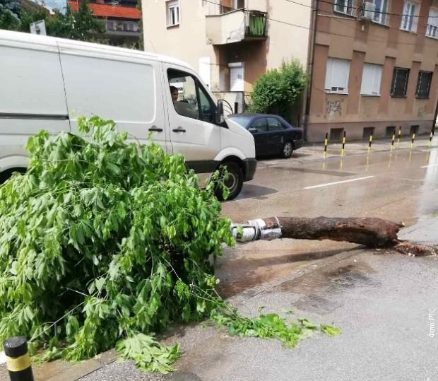 Tokom nevremena palo drvo u Vranju